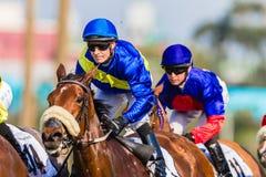 För jockeynärbild för hästkapplöpning två fokus för handling Arkivfoto