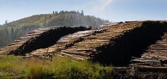 För journalbråte för stor timmer som Wood bearbetningsanläggning loggar bransch Arkivfoto
