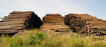 För journalbråte för stor timmer som Wood bearbetningsanläggning loggar bransch Fotografering för Bildbyråer