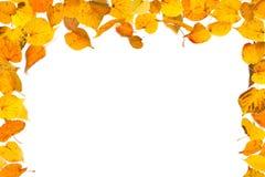 för kantram för höst blå sky för bladguld Arkivfoton