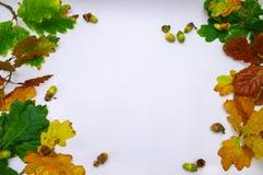 för kantram för höst blå sky för bladguld Royaltyfria Foton