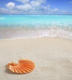 för karibiskt pärlemorfärg tropisk white sandskal för strand Arkivbild
