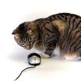 För katt mus kontra Arkivfoton