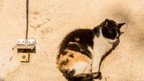 För katt - tryck på knappen Royaltyfri Foto
