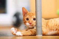För katthusdjur för djur hemma - röd gullig liten pott på golv Royaltyfri Foto