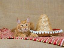 för kattungemaine mc för coon gullig sombrero red Royaltyfri Fotografi