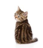 för kattungestående för bakgrund tätt skott upp white bakgrund isolerad white Arkivbilder