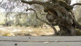 för kindtandnatt för el madrid tree för plats olive lager videofilmer