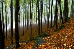 för klippaskog för höst härligt berg Arkivbilder