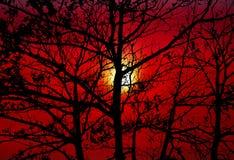 för konturträd för solnedgång tillbaka mörker - orange himmel arkivbilder