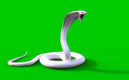 för konungkobra för albino 3d orm Royaltyfri Fotografi