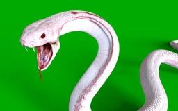 för konungkobra för albino 3d orm Arkivfoto