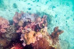 För korallrev för liv undervattens- färgrik folkmassa för fisk Arkivbild