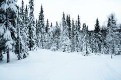 för korsskidåkning för 5 land trail Arkivbilder