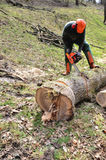 För kotlett träd ner Arkivfoto