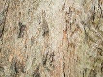 för kupatextur för bakgrund brunt trä bakgrund för stamdetaljtextur Gnarl treen Royaltyfri Foto