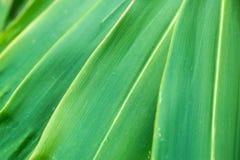 För lagergräsplan för slut övre bakgrund för abstrakt begrepp för natur för blad Arkivbilder