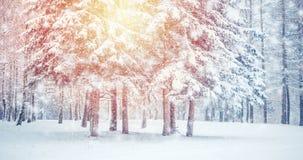 För landskapsikt för fantastisk saga magiskt träd för jul lager videofilmer