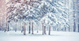 För landskapsikt för fantastisk saga magiskt träd för jul stock video