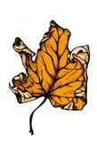 för leaflönn för höst bakgrund isolerad white Vektor Illustrationer