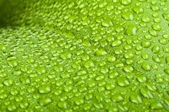 för leafväxt för droppar grönt vatten Royaltyfria Foton