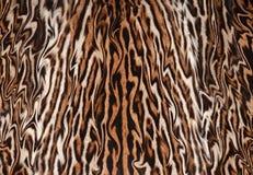 För leopardpäls för Closeup abstrakt illustration Arkivbild