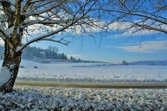 för liggandeberg för bakgrund tjeckisk högst vinter för snezka Arkivfoto