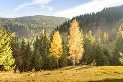 för liggandeberg för höst färgrik soluppgång Royaltyfria Foton