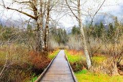 för liggandefjäder för björk wood tidiga trees för trail Arkivbild