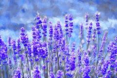 för liggandelavendel för aromatiskt fält växt- växt flod för målning för skogliggandeolja Royaltyfri Bild