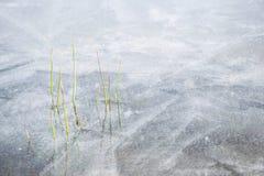 för ligganderussia för 33c januari ural vinter temperatur Djupfryst sjö med små växter som klibbar ut ur isen Arkivbilder