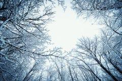 för ligganderussia för 33c januari ural vinter temperatur Filialer av träd som täckas med frost Royaltyfri Foto