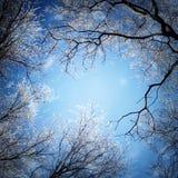 för ligganderussia för 33c januari ural vinter temperatur Filialer av träd som täckas med frost Arkivbilder