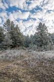 för ligganderussia för 33c januari ural vinter temperatur Frostig skog på en bakgrund av blå himmel med moln Fotografering för Bildbyråer