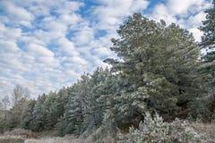 för ligganderussia för 33c januari ural vinter temperatur Frostig skog på en bakgrund av blå himmel med moln Royaltyfria Bilder