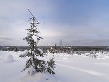 för ligganderussia för 33c januari ural vinter temperatur Snöig fält och djupfrysta träd Royaltyfri Fotografi