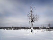 för ligganderussia för 33c januari ural vinter temperatur Snöig fält och djupfrysta träd Arkivbild