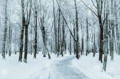 för ligganderussia för 33c januari ural vinter temperatur Snöig träd längs vintern parkerar, övervintrar den snöig naturen Royaltyfria Foton