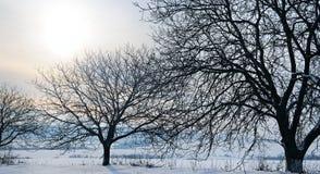 för ligganderussia för 33c januari ural vinter temperatur Soluppgång Fält och träd i snön Brett p Arkivbild