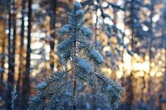 för ligganderussia för 33c januari ural vinter temperatur alps räknade trän för vintern för schweizare för snow för husplatsen li Arkivfoton
