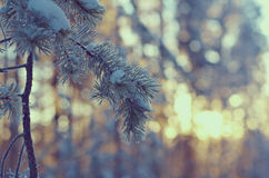 för ligganderussia för 33c januari ural vinter temperatur alps räknade trän för vintern för schweizare för snow för husplatsen li Arkivbilder