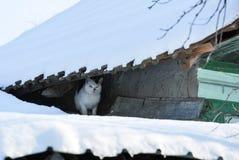 för ligganderussia för 33c januari ural vinter temperatur Gullig kisse på ett tak Royaltyfri Foto