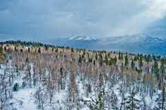 för ligganderussia för 33c januari ural vinter temperatur Nationalpark Taganay, Ryssland Royaltyfria Foton