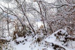 för ligganderussia för 33c januari ural vinter temperatur räknade snowtrees Royaltyfria Foton