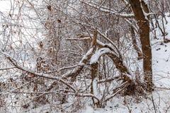 för ligganderussia för 33c januari ural vinter temperatur räknade snowtrees Royaltyfri Bild