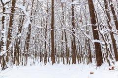 för ligganderussia för 33c januari ural vinter temperatur räknade snowtrees Royaltyfri Foto