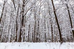 för ligganderussia för 33c januari ural vinter temperatur räknade snowtrees Arkivfoton