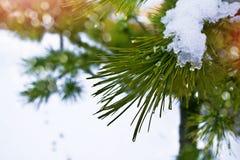 för ligganderussia för 33c januari ural vinter temperatur räknade snowtrees Arkivfoto