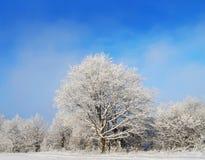 för ligganderussia för 33c januari ural vinter temperatur räknade snowtrees Arkivbild