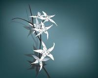 för liljatiger för bakgrund mörk white Royaltyfri Foto